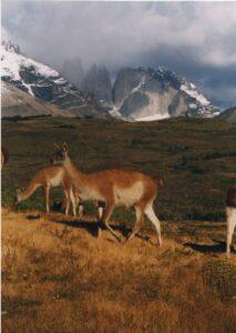 Patagonia Riding Season